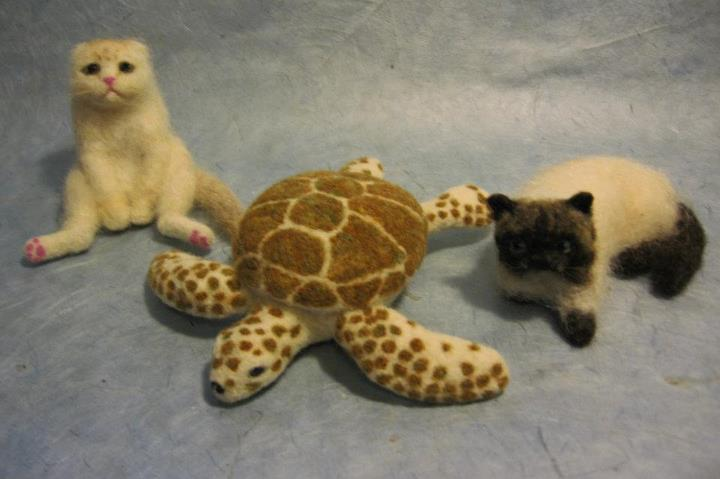 turtle  cats